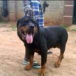 "Naming A Dog ""Buhari"", Police Impunity And The Law"