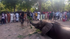 Elephant Recognizes Nigerian Soldiers In The Forest, Bows Down To Them
