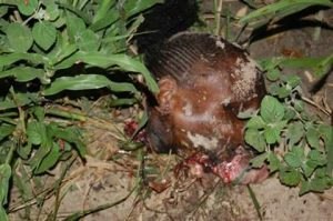 Troops Neutralize Female Suicide Bomber [GRAPHIC PHOTOS]