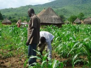 Economic Diversification: CBN Provides N1.9bn Loan To 12,405 Farmers