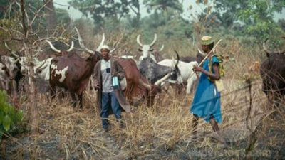South-east Herdsmen Disown Arewa Youth's Quit Notice
